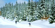 Cross-country skiing - winter Portal