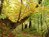 Rezerwat Źródliska w Dolinie Ewy