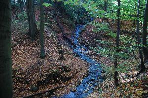 Swelina - Potok Graniczny /Swelinia/