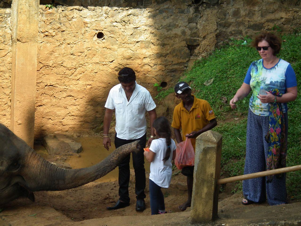 Pinawella - Dokarmienie słoni