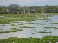 Srilanka przyroda