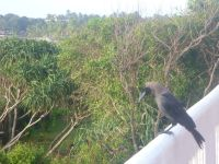 Srilanka ptaki