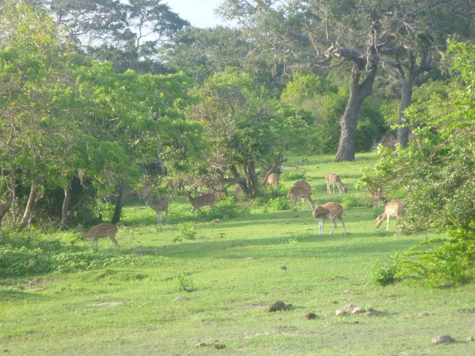 Zwierzęta w parku