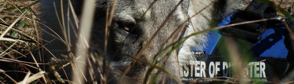 Uruk Hai – Lupusek,  wilczak czechosłowacki